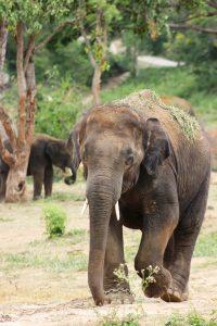 africa-animal-elephant-35693